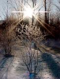 ice bushb.jpg