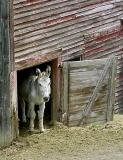 Small Door for a Small Donkey