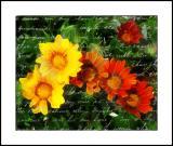 Effie flowers