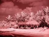 Infrareds