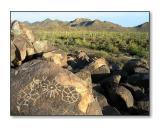 Ancient Indian PetroglyphsSaguaro Nat'l Park, AZ