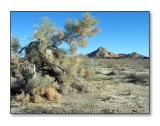 Desert SceneCadiz Valley, CA