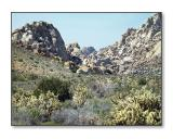 Rocks & CactusSheep Hole Mtns., CA