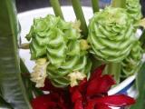 'Green Ice' Calathea (Calathea cylindrica)
