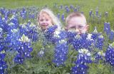 Dube Family Bluebonnet Pictures