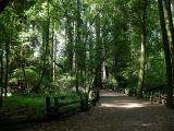 052603 Henry Cowell SP