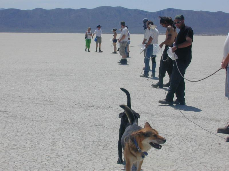 Dogs. herd the Humans. into place for the Trans-Playa races.