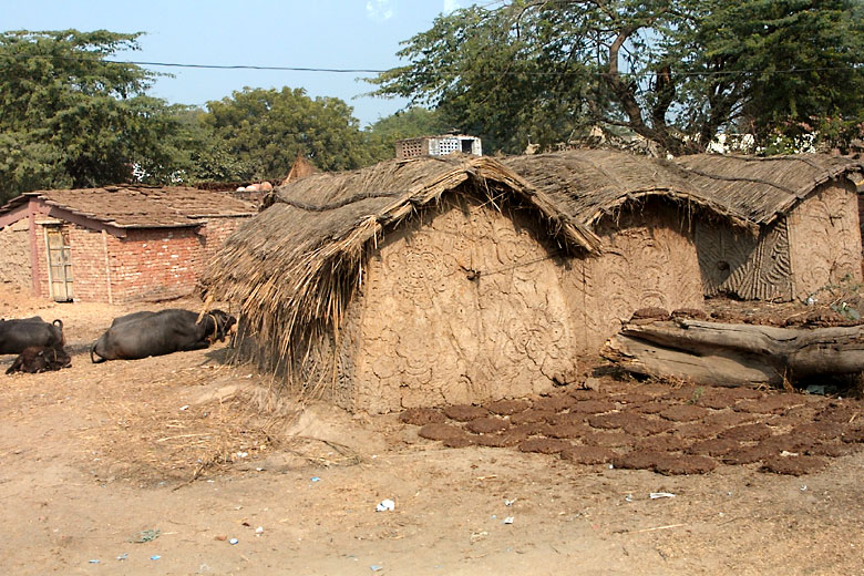 Typical village mud-houses and cow-dung cakes