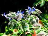 Garden in the sunshine