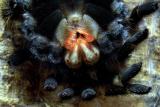 Arachnid dentistry
