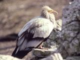 Birds from Jordan