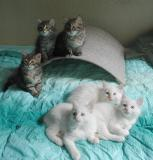 The kittens pose at 8 weeks