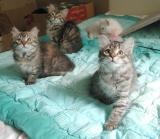 Hertta, Roosa, Nasu & Wanda