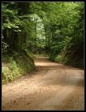 The-Road-to-Longwood.jpg