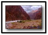 Grand Canyon Scenics and Wildlife (singular)