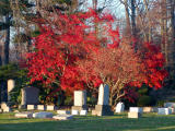 Fall Colors at Lakeview Cemetery