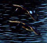 twilight fliers.jpg