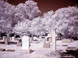 Charleston Graveyard 2