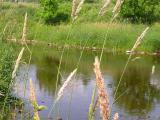 Finish -- upstream view