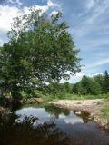 beebe-river-summer-03-4179.jpg