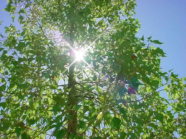 sun, tree, heaven, God