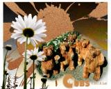 Cubs in the Daisies