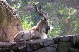 Zoo Pics King of the Mountain.jpg