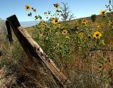 Eastern Sierra - Summer
