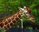 11799 zoo