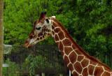 11801 zoo