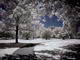 Brookgreen Gardens infrared 11