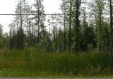 Blandings habitat along Roger Stevens Drive