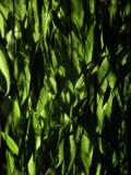 Benoajan, Molino del Santo, 'Through the Willow'