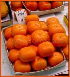 Square Persimmons