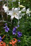 Gardens - 2004