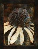 Cone Flower, Framed