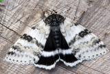 white-underwing-6627.jpg
