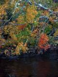 autumn-maple-8052.jpg