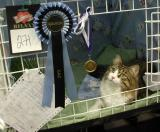 Boogie and his CAC rosette and nomination medail.