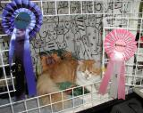 Punkku and his first CAC and BIV rosettes.