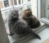 Viki and Pikku