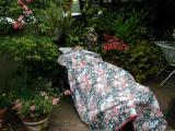 Don sleeping in the garden...