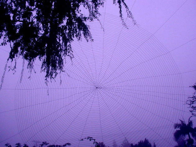 Here is Dons 2003 finished web...