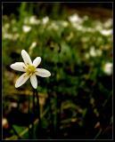 flower-resized.jpg
