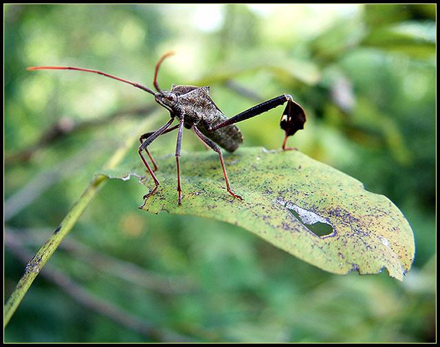 devil-bug2.jpg