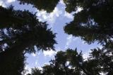 trees sky.jpg