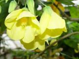 Hoa trong green house