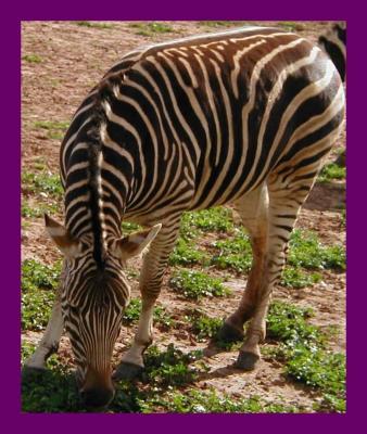 Monarto  Zoological  Park