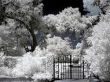 Brookgreen Gardens infrared 12