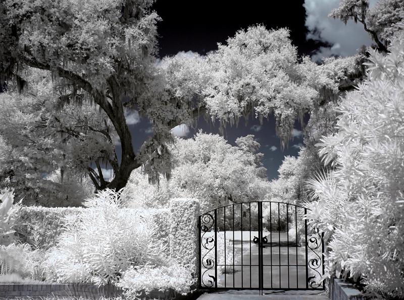 Brookgreen Gardens infrared 12